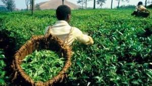 agriculture-RDC_cVanCoolen-Eureka-Slide-reporters-REA